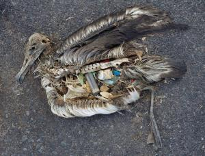 Persistent plastic choking out our life Chris Jordan's bleak picture