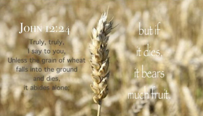 john-12-24-unless-the-grain-of-wheat-dies-it-abides-alone-but-if-it-dies-it-bears-much-fruit